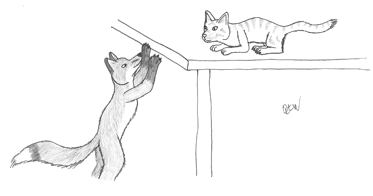 Cat and fox